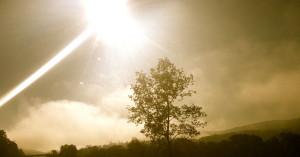 starseed tree